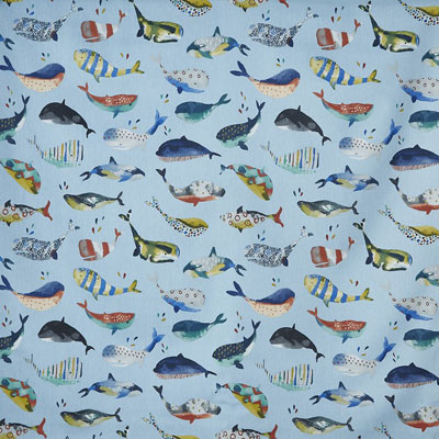 Whale Watching - Pacific - £12.50 per metre